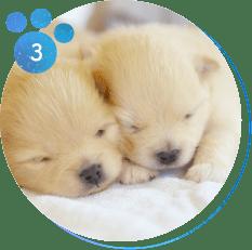 猫及び小型犬、生後3か月以内の子犬は「完全室内飼育」にする事